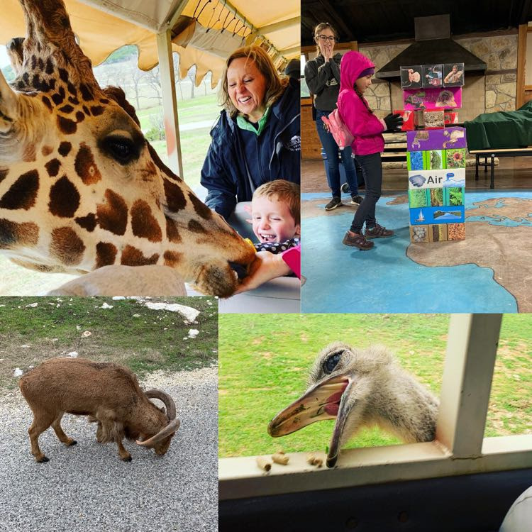 Safari Hangout Field Trip