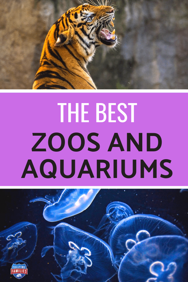Best Zoos and Aquariums in the USA