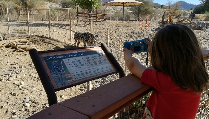 child taking pictures of zebra at the zoo