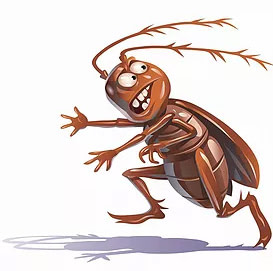 roach running from local pest control services