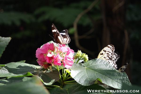 Butterfly Rainforest Florida