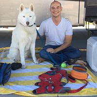 Essential Dog Travel Accessories