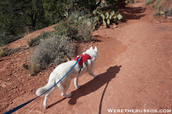 Ruffwear Web Mast Review - Walking 2