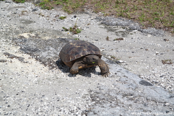 Thousand Trails Orlando wildlife