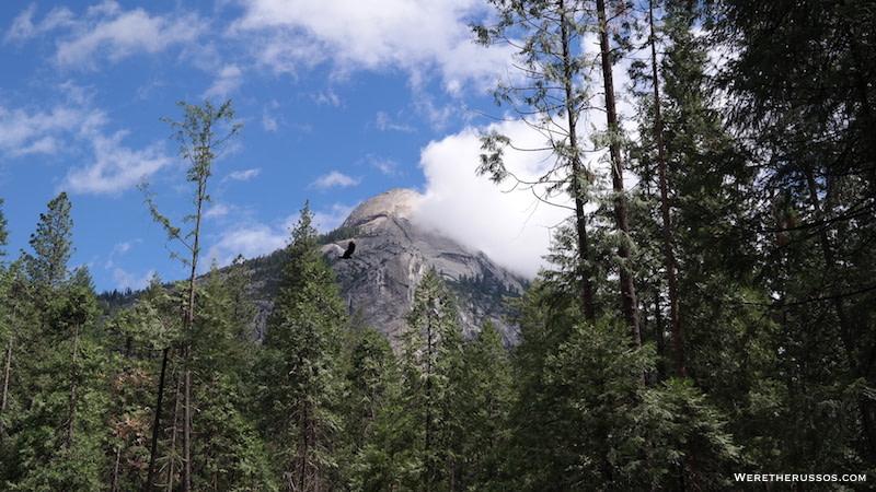 Yosemite Half Dome Upper Pines