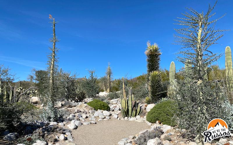 Arizona-Sonora Desert Museum Cactus Garden