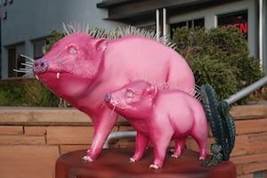 Sedona Pigs 2