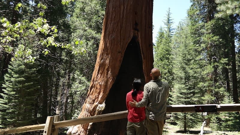 Kings Canyon National Park The General Grant Tree