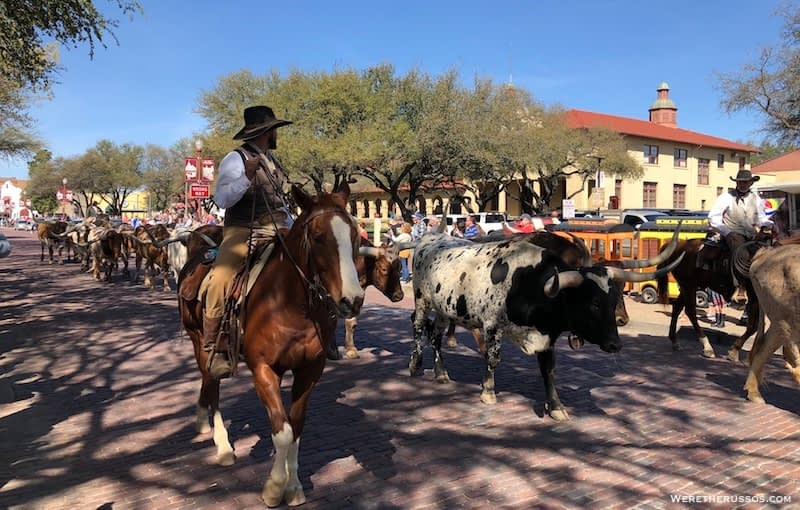 Forth Worth Stockyards cattle drive